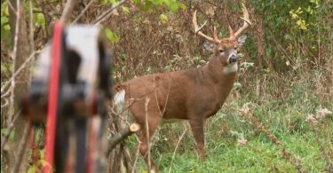 where to shoot a deer