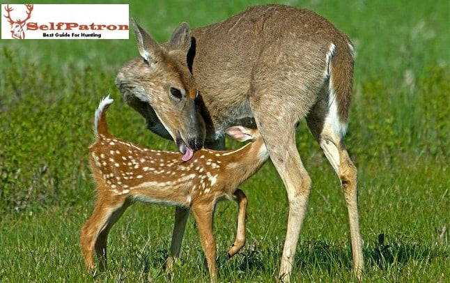 Best Deer Feeding Times