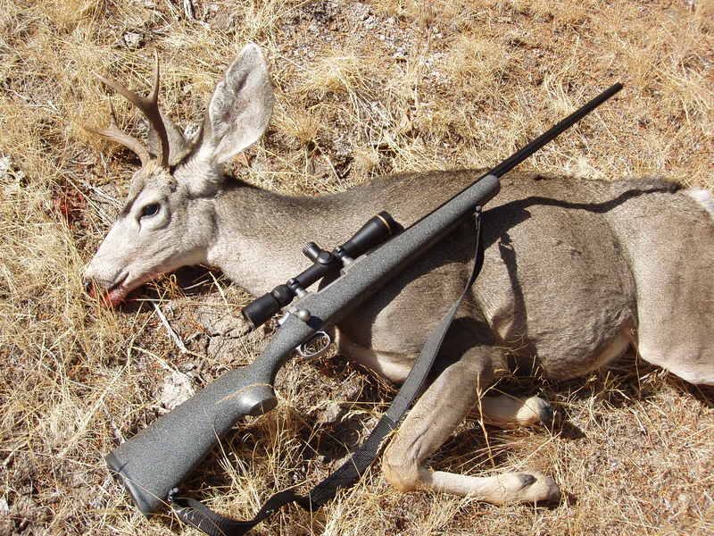 best deer hunting rifle for the money